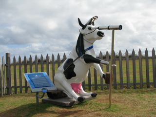 Cape Leeuwin's Cow - part of the world wide cow trail!