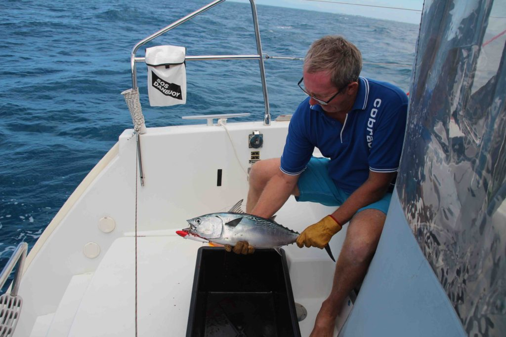 GW with a mackeral tuna